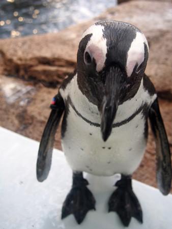 20130406 京都水 窓際のペンギン達02