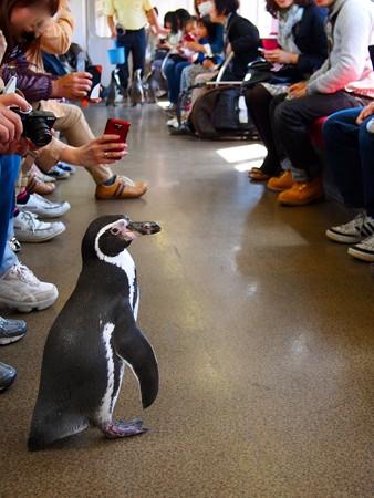 20130413 志摩 ペンギン列車21