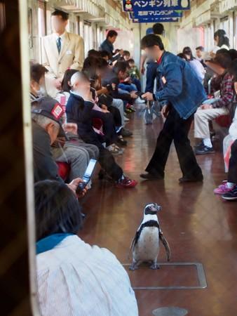20130413 志摩 ペンギン列車15