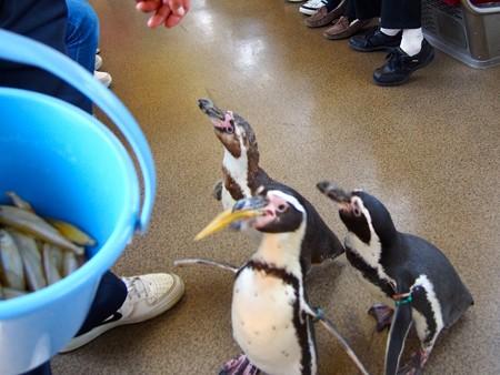 20130413 志摩 ペンギン列車11