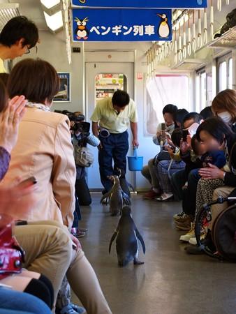 20130413 志摩 ペンギン列車33
