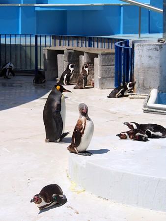 20130413 志摩 ペンギンランド11