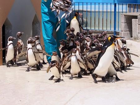 20130413 志摩 ペンギンランチ02