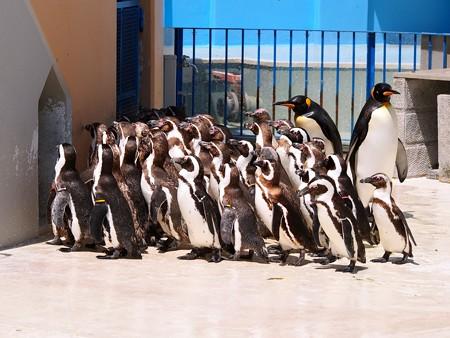 20130413 志摩 ペンギンランチ01