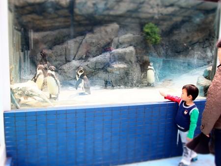 20130414 鳥羽 ペンギンプール09