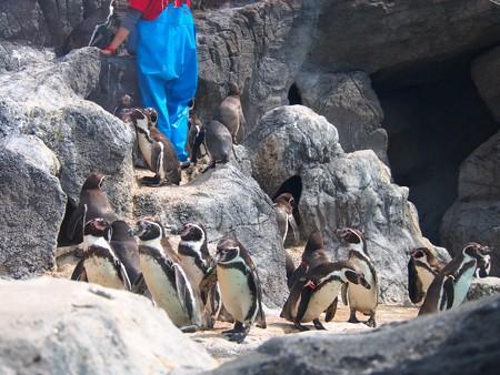20130414 鳥羽 ペンギンプール07