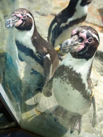 20130414 鳥羽 ペンギンプール01