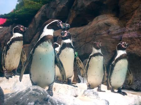 20130414 鳥羽 よりぬきペンギン19