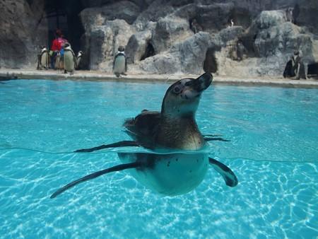 20130414 鳥羽 よりぬきペンギン15