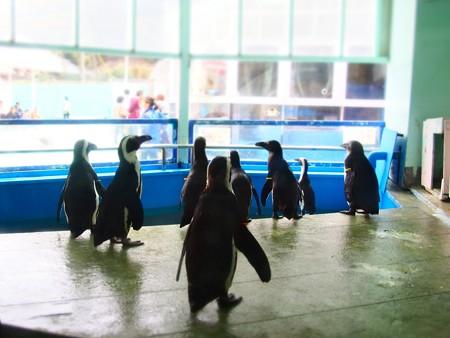 20130414 二見 ペンギン舎02