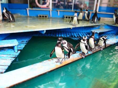 20130414 二見 ペンギン舎01