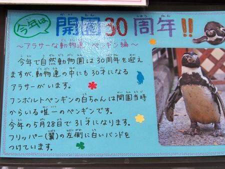 20130525 江戸川 白ちゃん