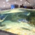 Photos: 20130905 海遊館 イワトビプール05