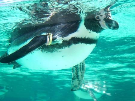 20131116 葛西 ペンギン風景01