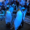 Photos: 20131208 海遊館 イルミキング01