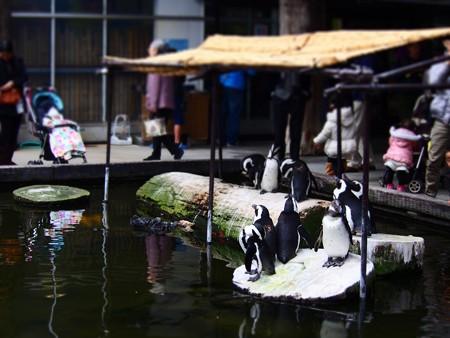 20131208 神戸 ペンギン池01