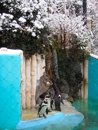 20130208 上野 雪の日04