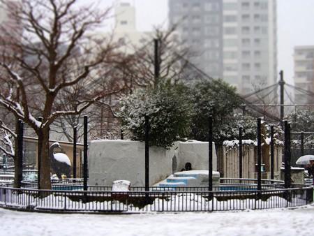 20130208 上野 雪の上野動物園02