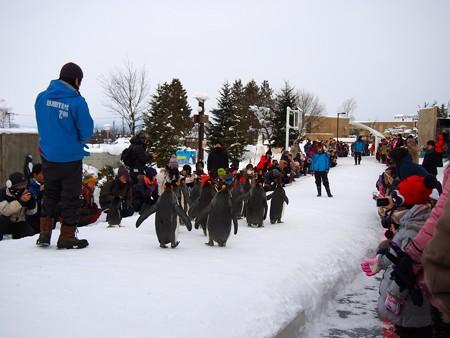 20140124 旭山 ペンギンの散歩03