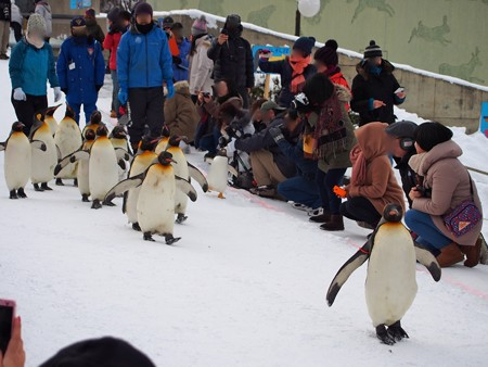 20140124 旭山 ペンギンの散歩06