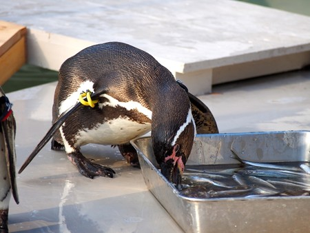 20140322 井の頭 ペンギンプール07