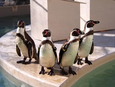 20140322 井の頭 ペンギンプール05