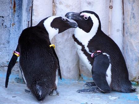 20140321 上野 ペンギン達02
