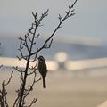 Photos: Birds