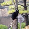 Photos: 猫もおだてりゃ・・・