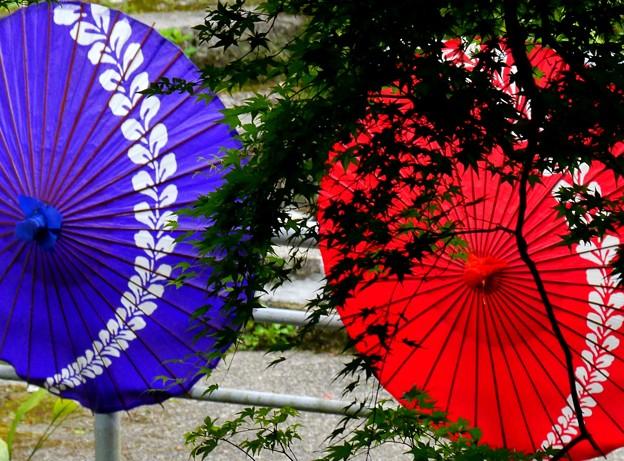 写真: 好いたお方と揃い傘