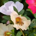 花粉まみれ なう