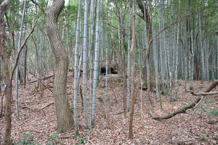 竹薮の中の今泉古墳