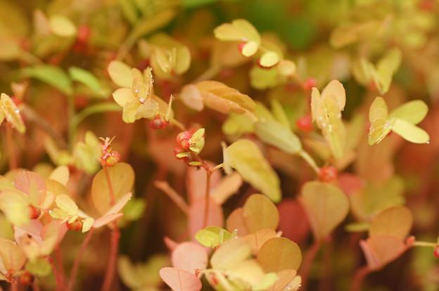 鉢の中の小さな秋色たち