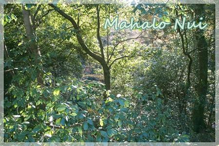 紅葉の中に木漏れ日と映える緑