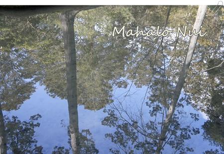 水面に映る木々1