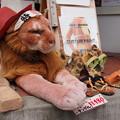 Photos: 看板獅子