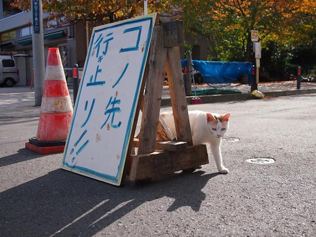 1601_交通保安猫