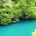 Photos: 白丸ダム湖