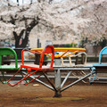 雨の公園(春)