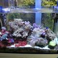 20130626 病院の海水魚水槽