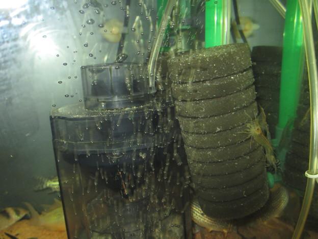 20130726 60cmコリドラス水槽の掃除後