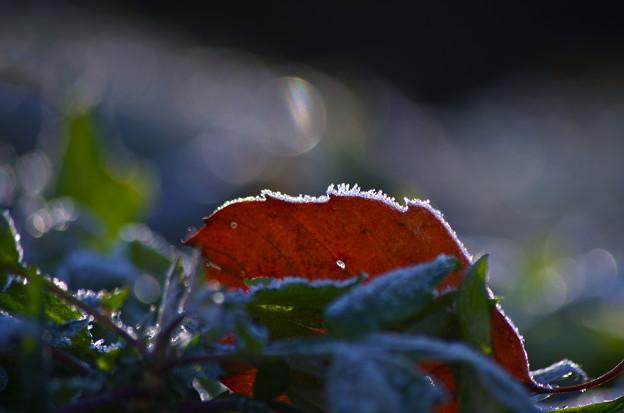 寒い朝 5
