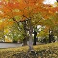 奈良公園から大仏池へ