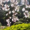 浅草寺・伝法院庭園
