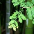 写真: 竹林で