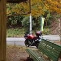 写真: 紅葉を探しに3