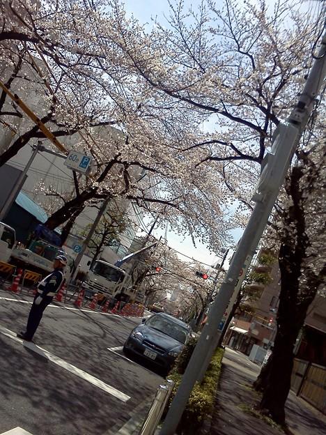 咲きまくってるじゃん!!