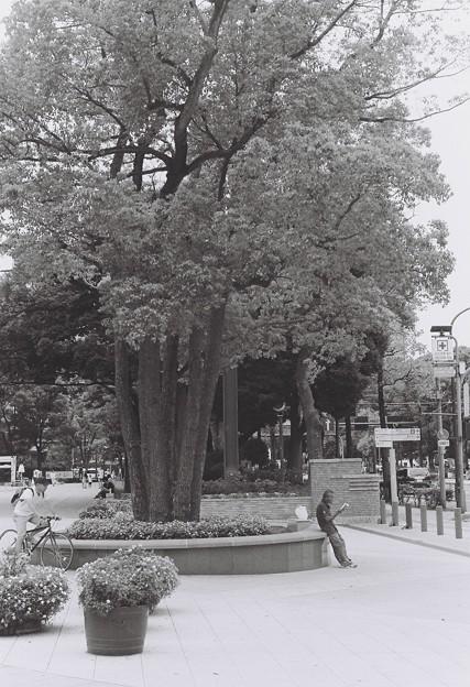 歌うたいの木