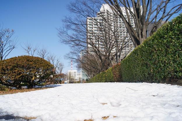 和田倉公園から