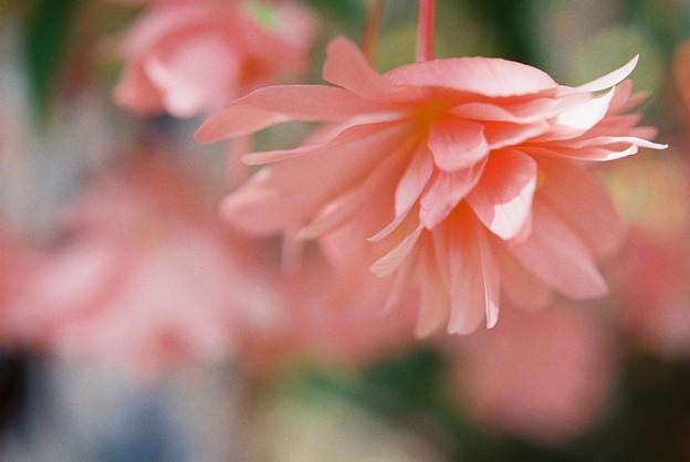 ピンクの印象